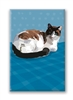 Calico, Cat Fridge Magnet