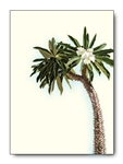 Madagascar Palm Tree Card