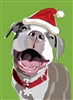 Pitbull Holiday Card